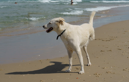 Cheerful disability dog on three legs playing on Beach in Charles Clore Park. Tel Aviv, Israel / Bild iStock Photo